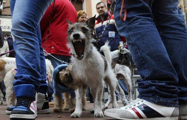 Cão é flagrado dando bocejo bizarro em Madri
