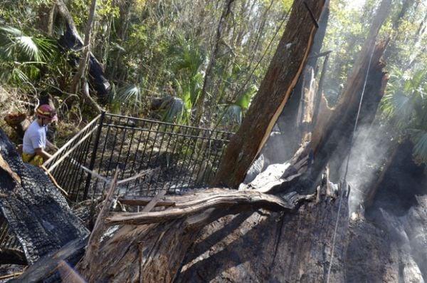 Árvore de 3,5 mil anos de idade pega fogo nos Estados Unidos
