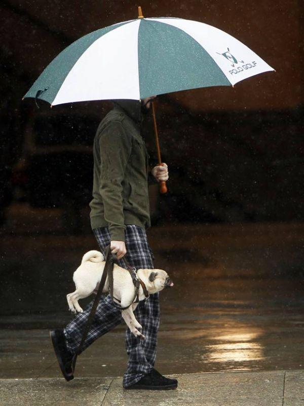 Cão fica parecendo bolsa ao ser carregado por corda pelo dono