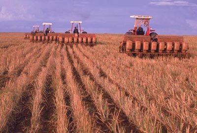 FAO: Crise mundial fará preços de alimentos ficarem estáveis
