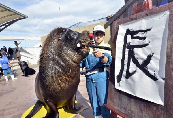Leão-marinho escreve palavra