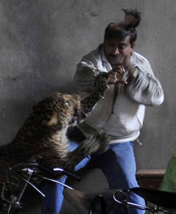 Três pessoas ficam feridas após ataque de leopardo na Índia