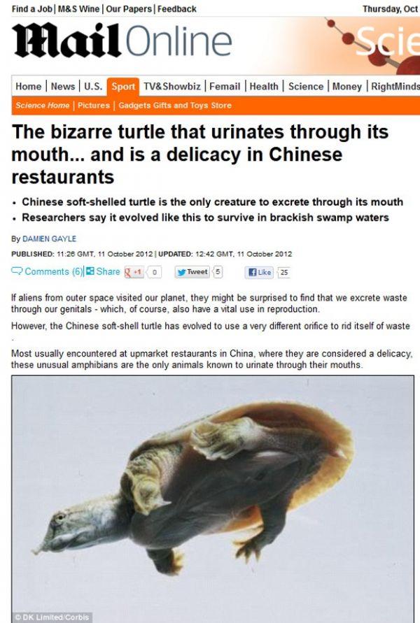 Tartaruga que urina pela boca é servida como iguaria na China