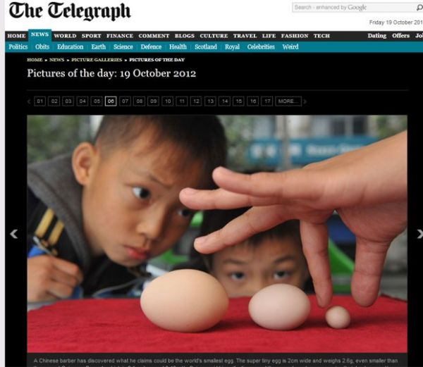 Chinês diz que sua galinha colocou ovo que pode ser o menor do mundo
