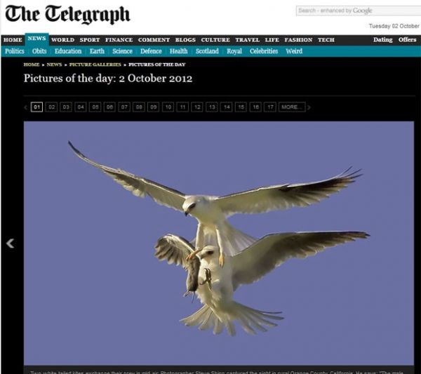 Fotógrafo flagra gavião passando presa para fêmea em pleno voo