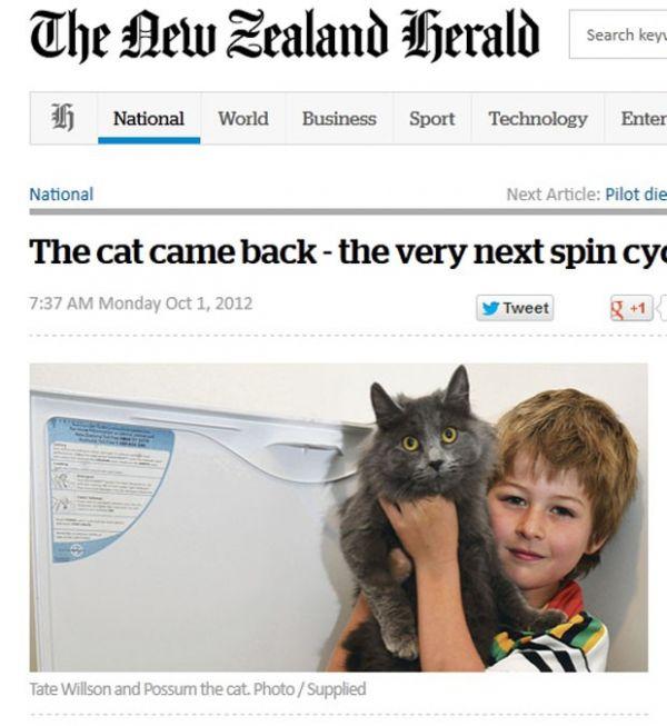 Gato sobrevive após ficar 55 minutos em máquina de lavar