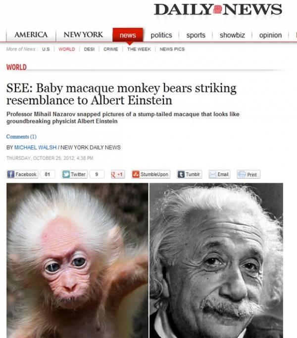 Macaco parecido com Albert Einstein faz sucesso na web