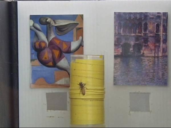 Estudo de australianos e brasileiros mostra que abelhas distinguem Picasso de Monet
