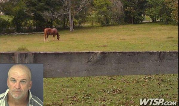 Americano é preso por invadir estábulo e fazer sexo com cavalo