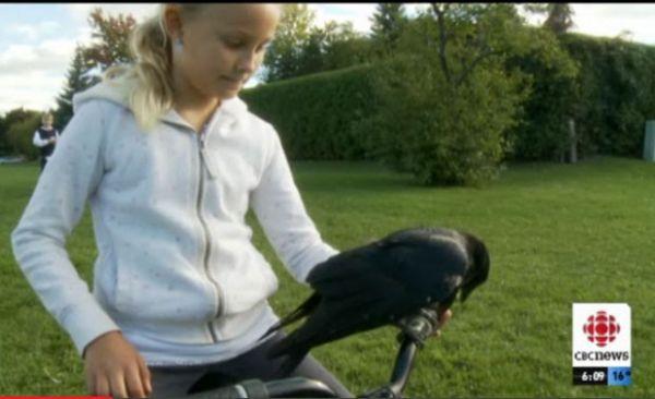 Família canadense mantém corvo como animal de estimação