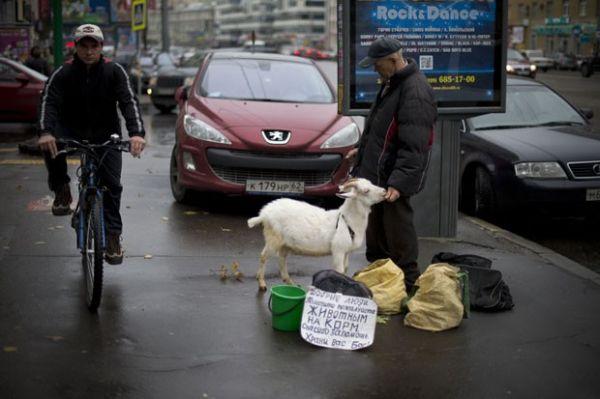 Homem é flagrado pedindo esmola com cabra na Rússia