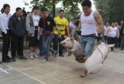China promove competição de carregamento de porcos