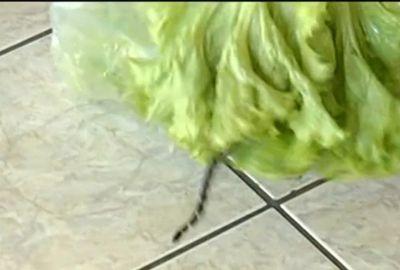 Casal encontra cobra jararaca-dormideira em pacote de alface