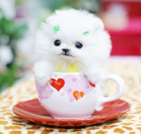 Site reúne fotos de filhotes de cães colocados em xícaras