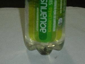 Jovem encontra aranha dentro de garrafa de refrigerante