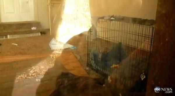 Pai é preso após prender filha de 1 ano em gaiola para cães