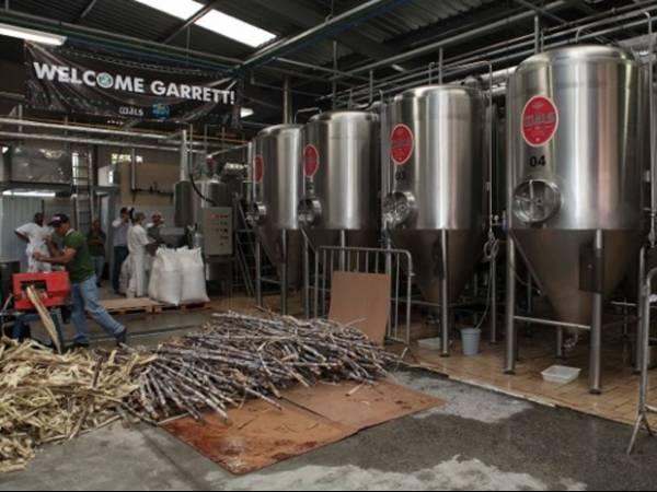 Primeira cerveja com cana-de-açúcar é fabricada no Brasil
