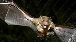 EUA criam caverna artificial para salvar morcegos de epidemia