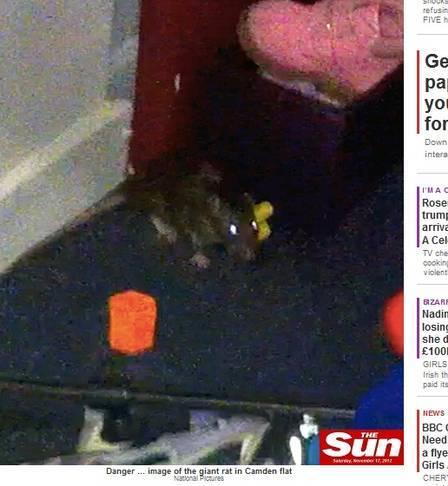 Bebê é atacada por rato enorme enquanto dorme, na Inglaterra
