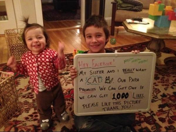 Crianças pedem gato pelo Facebook e imagem tem mais de 100 mil curtidas