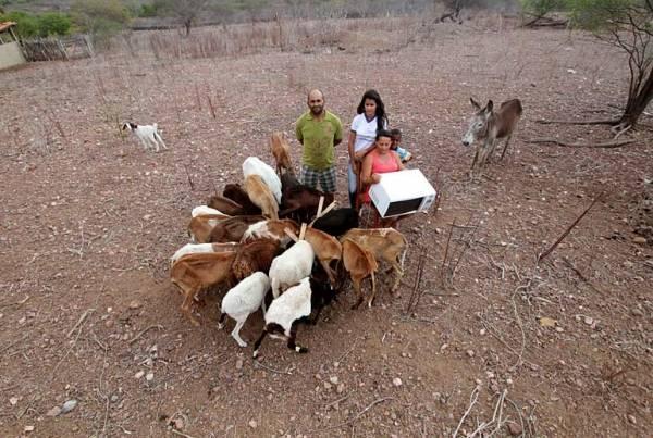 Seca faz famílias venderem eletrodomésticos e animais no Nordeste