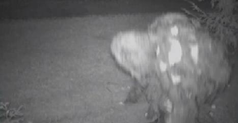 Americano filma criatura estranha devorando maçãs em sua fazenda