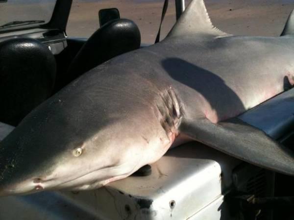 Homem pesca tubarão de 200 kg no litoral de Pernambuco