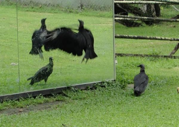 Veja aves assustadas com o próprio reflexo e outras fotos curiosas