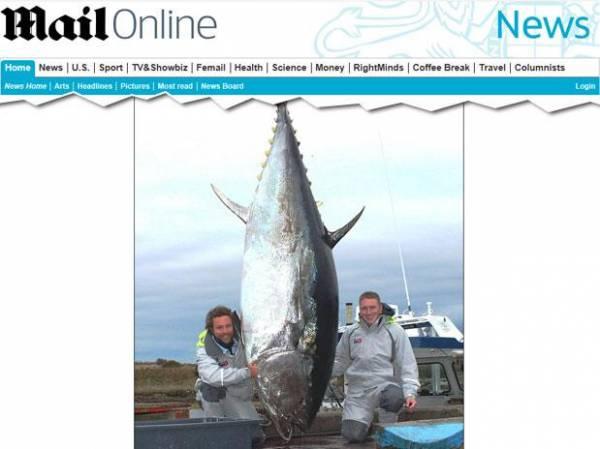 Homem pesca atum de 450 kg que pode render 20 mil sushis
