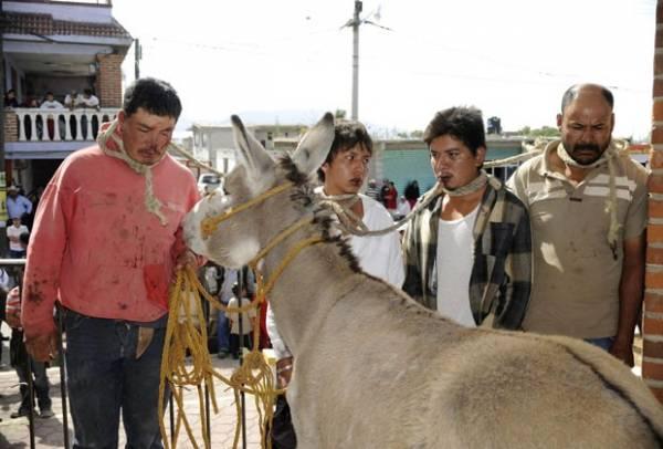 Homens acusados de roubar burro são amarrados ao animal no México