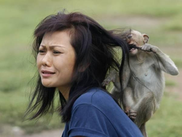 Macaco morde cabelo de mulher após