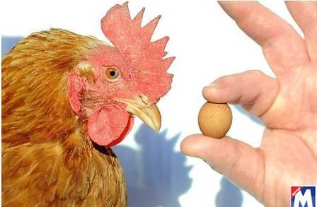 Fazendeiro inglês acredita ter encontrado menor ovo do mundo, de cinco gramas
