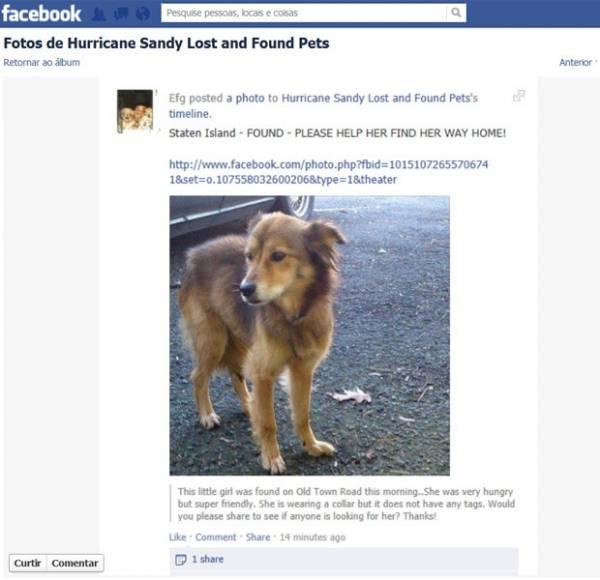 Após Sandy, americanos usam redes sociais para buscar pets perdidos