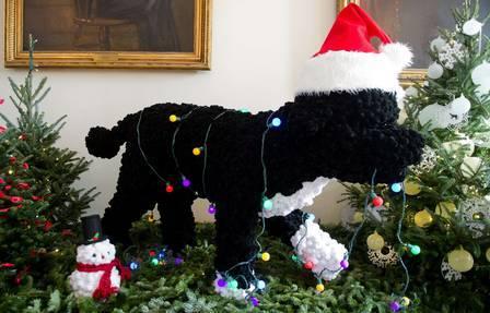 Cachorro de Obama verifica decoração de Natal da Casa Branca
