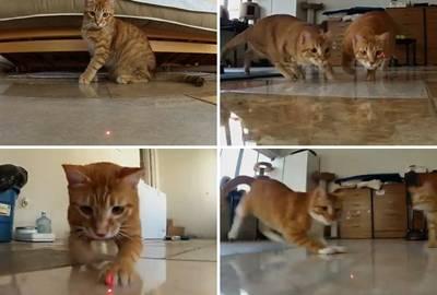 Gatos fazem perseguição implacável a laser em vídeo em primeira pessoa