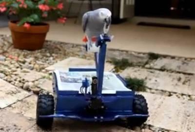 Americano desenvolve veículo para ser controlado por papagaio