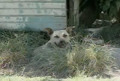Idosa de 86 anos é atacada e morta pelo próprio cão