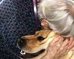 Vovó italiana deixa mais de R$5 milhões para cão de estimação