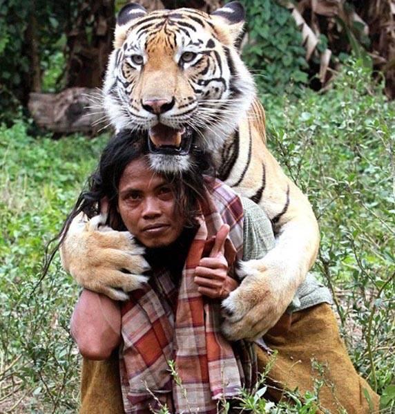 Homem cria amizade inusitada com tigre na Indonésia