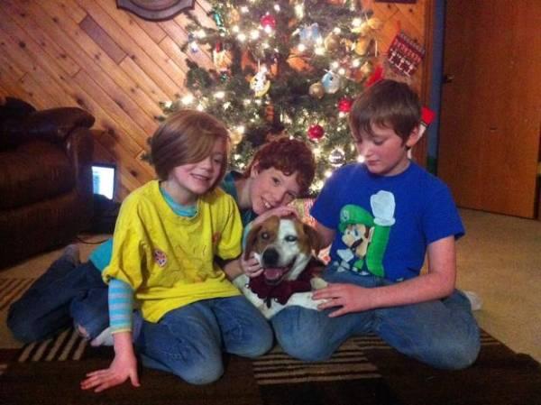 Pelo Facebook, família recupera cão cego perdido em nevasca