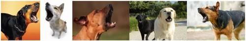 Homem é multado por deixar cães latirem 863 vezes em 23 minutos