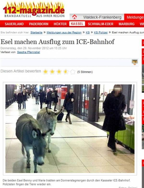 Dois burros são vistos vagando em estação de trem na Alemanha