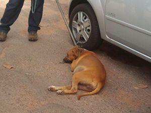 Corpo de menina de 3 anos atacada por 4 cães em MT é enterrado
