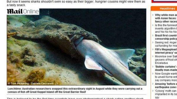 Divulgada primeira imagem de um tubarão sendo engolido por outro