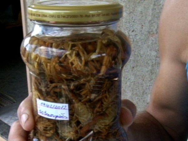 Capixaba guarda 200 escorpiões que invadiram casa em 10 meses