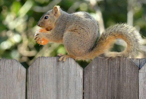 Esquilo é flagrado