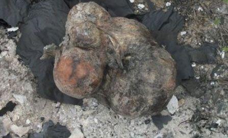 Fetos humanos são encontrados em terreno baldio no PI