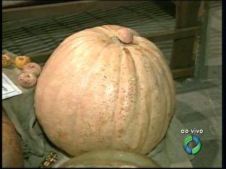 Abóbora gigante de 92 kg é atração em evento rural no Paraná