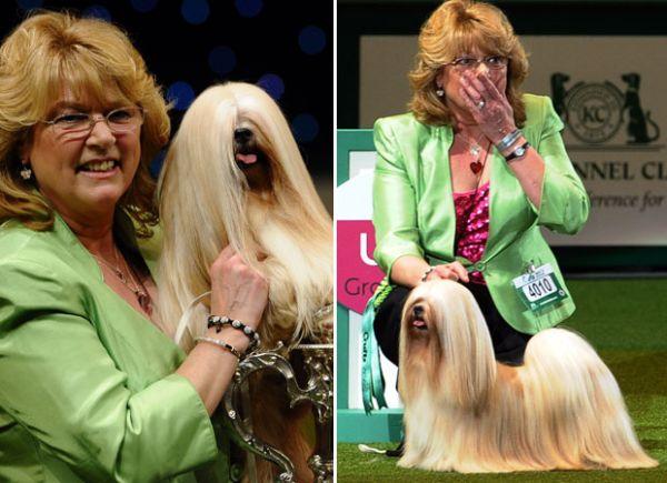 Cadela de 7 anos vence concurso de beleza canina no Reino Unido