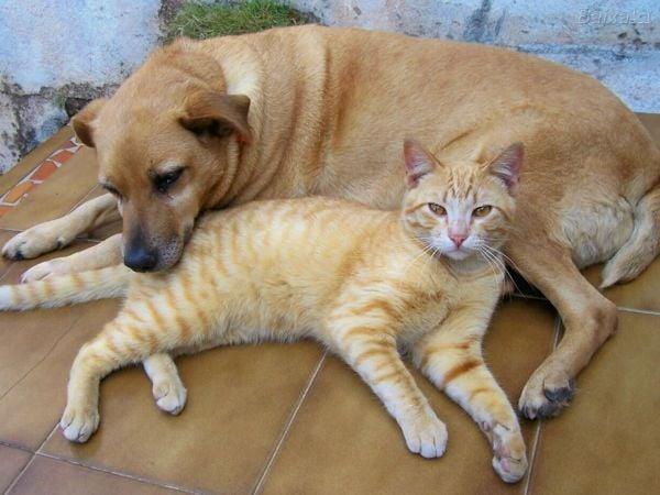 Sem regulamentação, lei que institui Feira de Animais pode ficar inútil